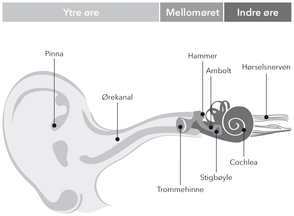 ear-graphic_Signia_no_950x700px